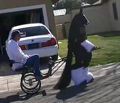 Zorro pulling Cart