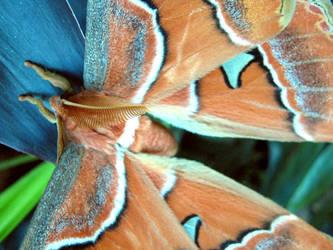 Mariposa 02