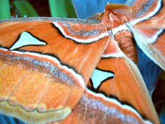 Mariposa 03