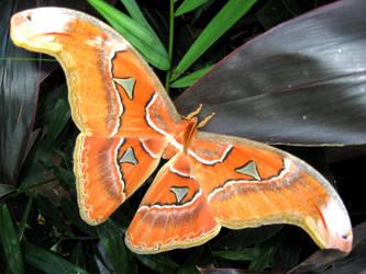 Mariposa full