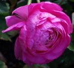 A Flower for Tammara by Amarie-Veneanar