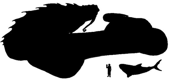 Comparativa entre un tiburón blanco, un humano y una serpiente de chelestra