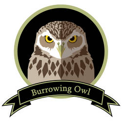 Burrowing Owl by kravinoff