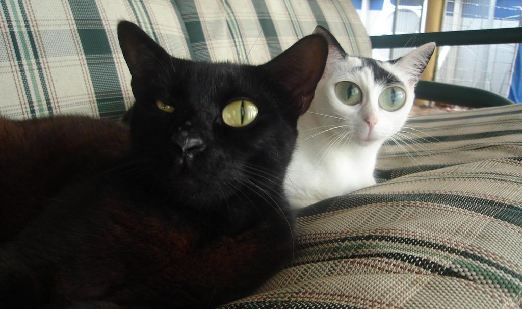 S Cat Meth