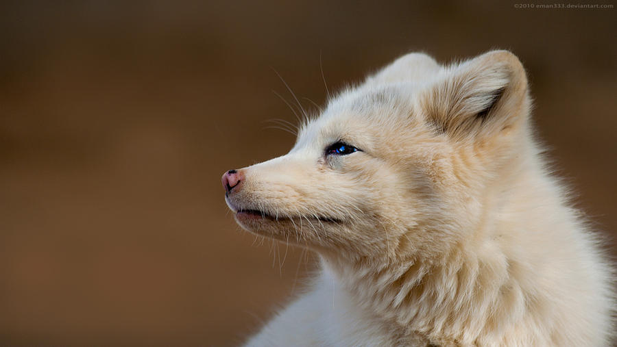 White Fox 1920x1080