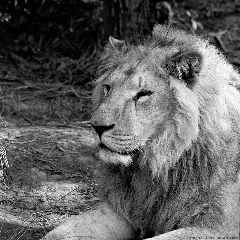 White Lion by Eman333