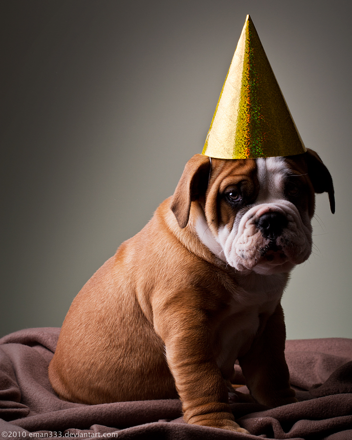 Its not my birthday - Photographing Pets Essential Tips