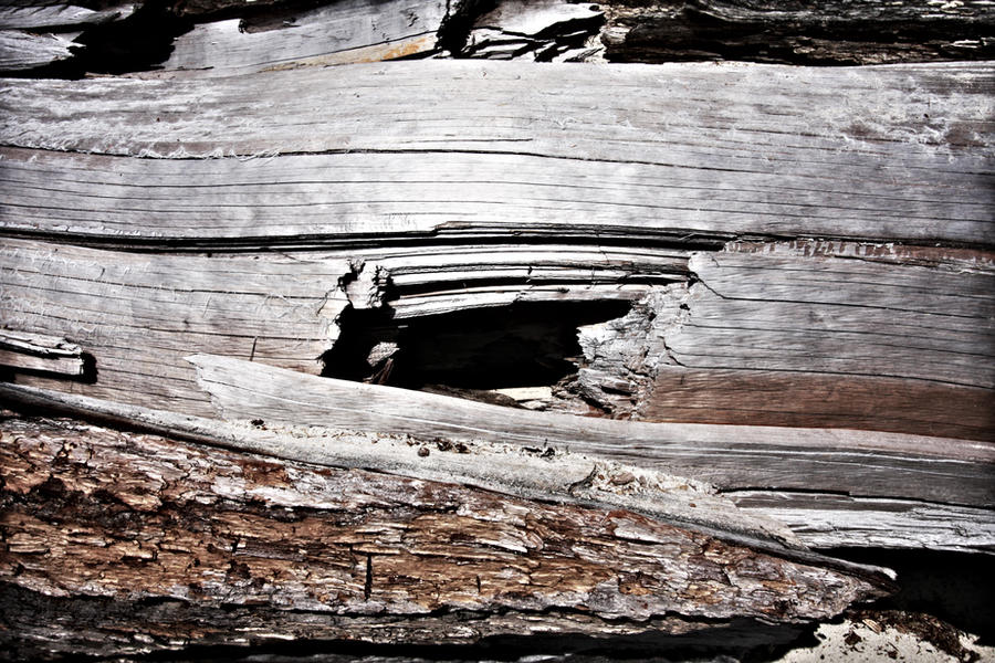 Tree Frame by iwonderbc