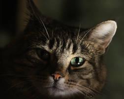 Cat in Shadows