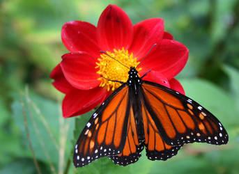 Butterfly by tidesend
