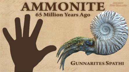 New Zealand Ammonite Gunnarites Spathi