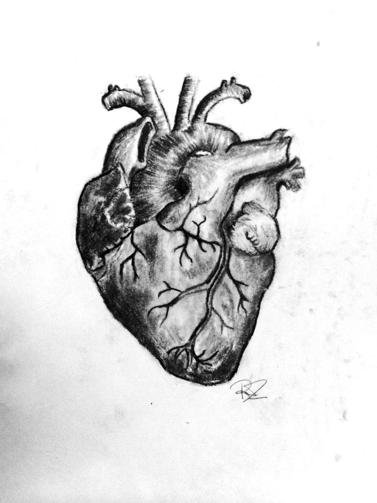 Anatomical Heart drawing by necr0morph on DeviantArt