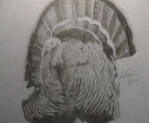 Turkey by OMKDrawings