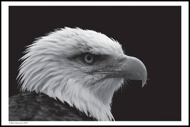 Black and White Eagle by CoupeKid