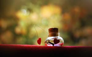 LOVE by mohammadshadeed
