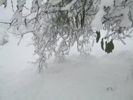 Snow by mohammadshadeed
