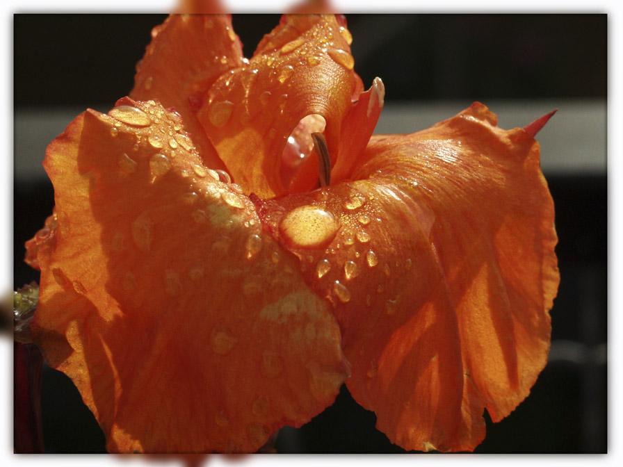 Untitled Orange by vw1956