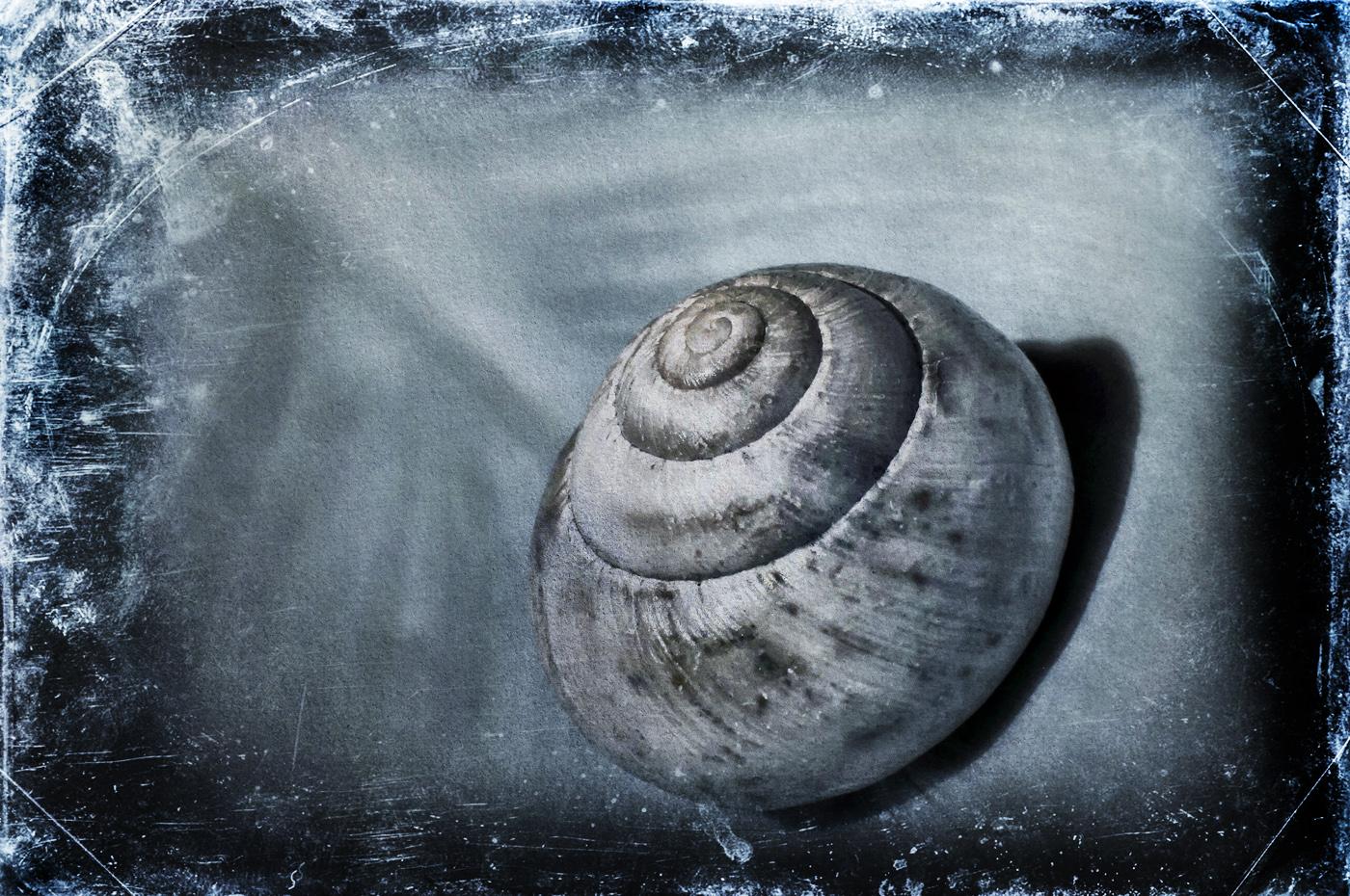 snail 72 by vw1956