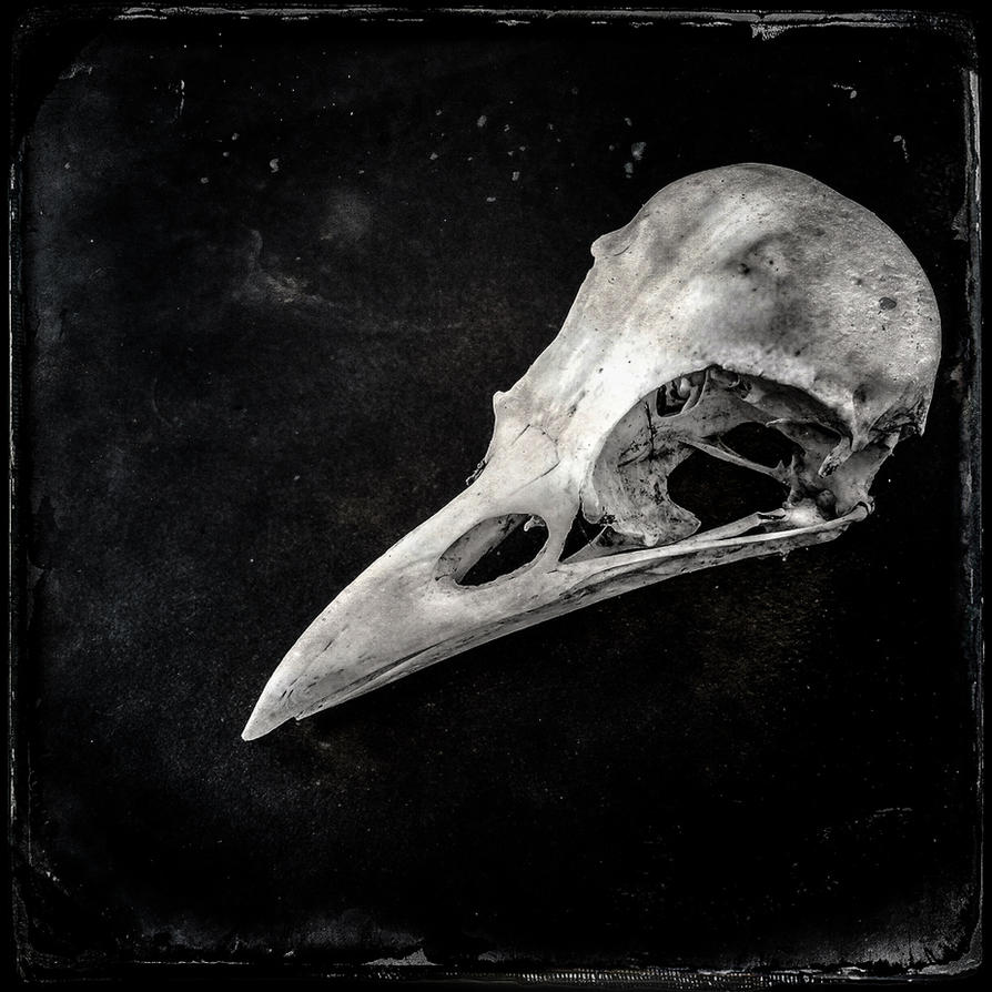 raven by vw1956