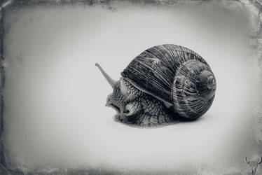 Snailstuff by vw1956