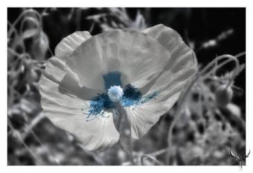 Statesboro Blue by vw1956