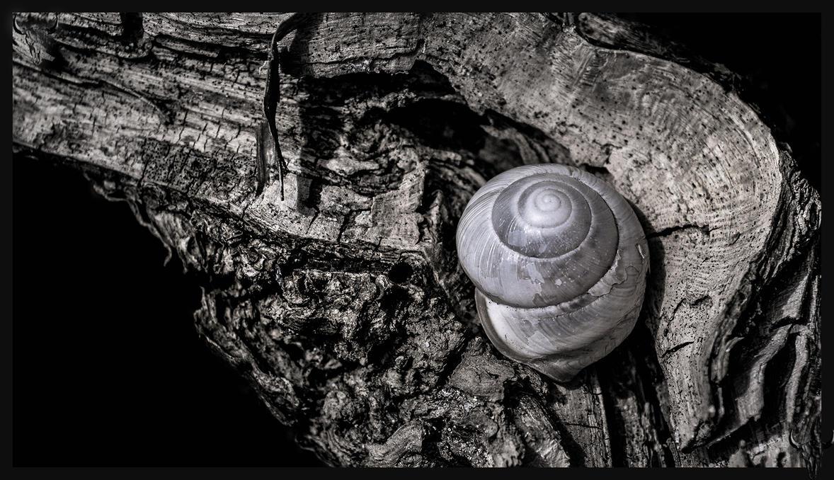 snail26 by vw1956