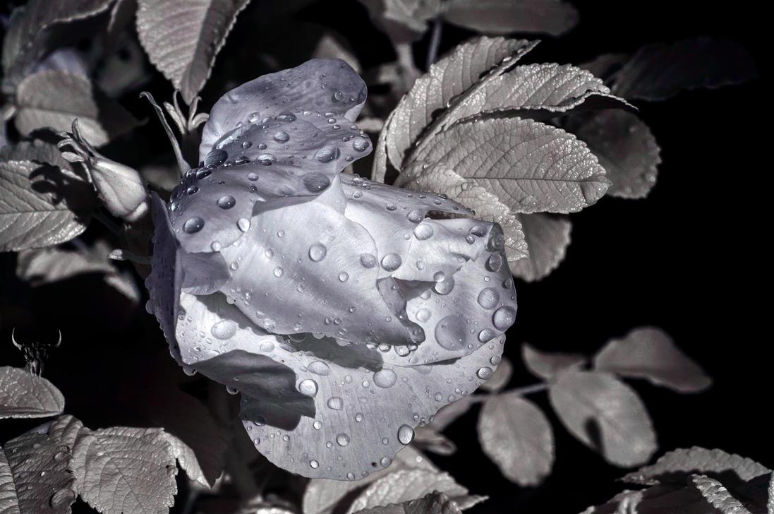 Wet by vw1956