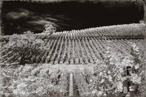 vineandwine by vw1956