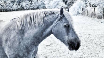 Blaues Pferd X