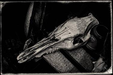 bones II by vw1956