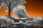 tangerine dream by vw1956