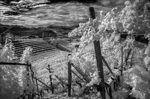 strada del vino II by vw1956