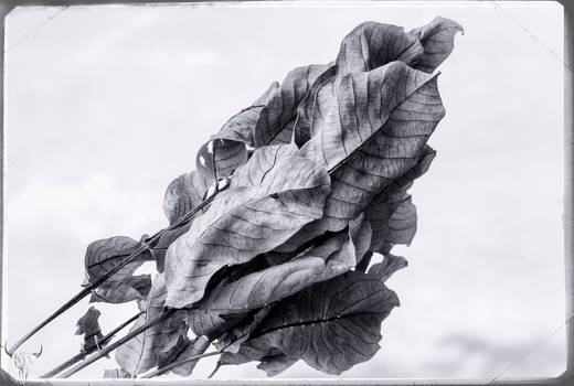 leaves in mono