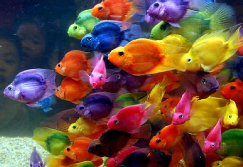 peces by MoRiaTt