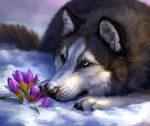 Spring husky