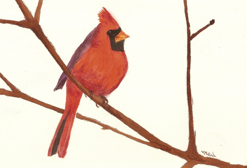 winter bird red robin by heartmelinda on deviantart