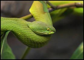 Snake by JJLuoma
