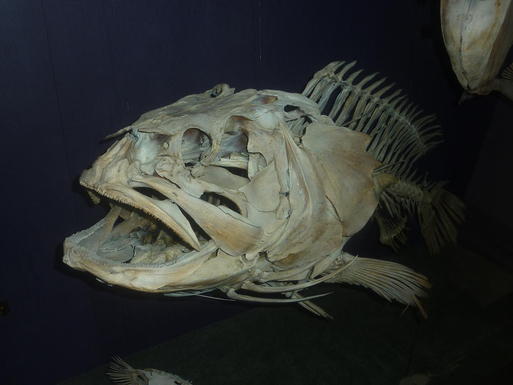 Fish skeleton by madamemonty