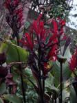 flameflower 2