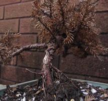 little tree by zenkatydid
