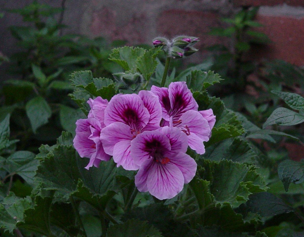 pink by zenkatydid