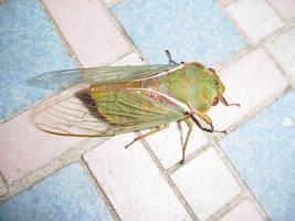 cicada the cat dragged in 1 by zenkatydid