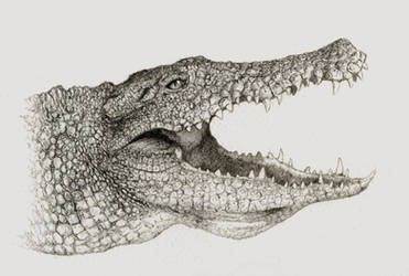 Nile crocodile by Titanslicer