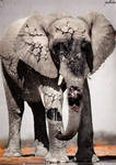 Elefanterrante