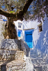 Chefchaouen:The Olive Tree by Mgsblade