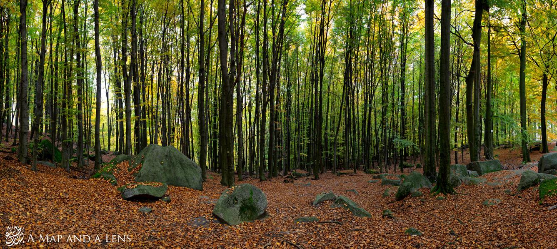 Felsburg Forest by Mgsblade