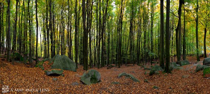 Felsburg Forest