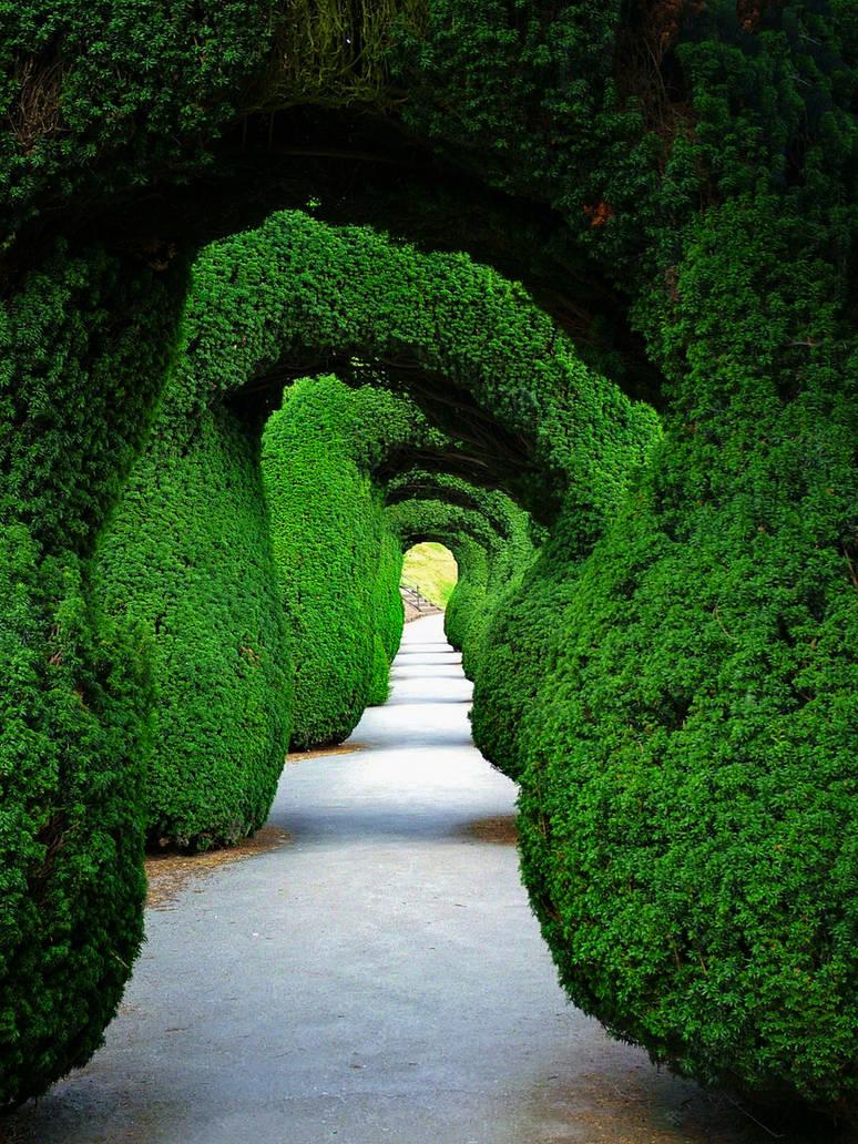 Green Tunnel by Mgsblade