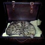 Cat in a Suitcase .