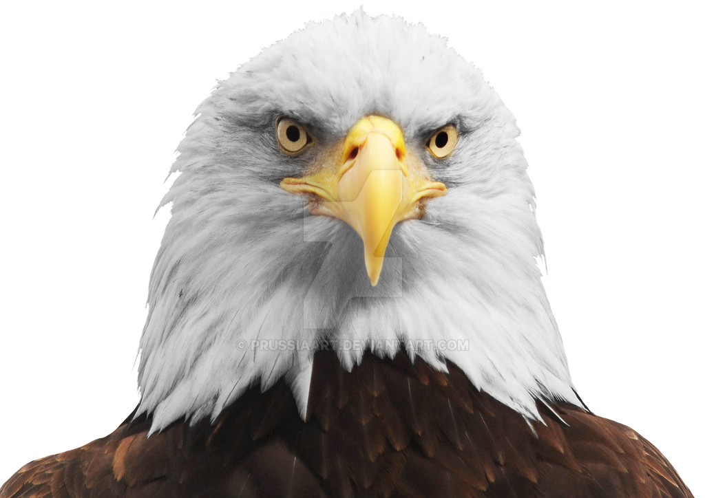 The Head Of An Eagle On A Transparent Background By